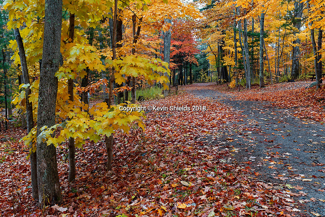 Autumn in Camden Hills State Park, Maine, USA