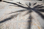 Graphic image of the shadow of a tall palm tree on a cobblestone pavement. Cadiz Spain