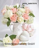 Alfredo, FLOWERS, BLUMEN, FLORES, photos+++++,BRTOLMN47878,#f#, EVERYDAY