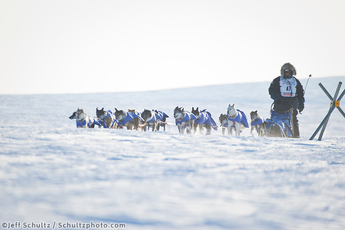 Lance Mackey on the trail into Nome just 5 miles from the finish line to win the 2009 Iditarod at Nome, Alaska during Iditarod 2009