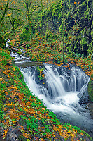 ORCG_D198 - USA, Oregon, Columbia River Gorge National Scenic Area, Emerald Falls on Gorton Creek in autumn with fallen leaves and lush vegetation.