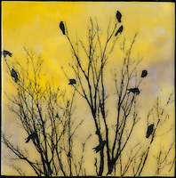 Mixed Media photo transfer over wax encaustic/watercolor of a family of crows in a tree. SOLD