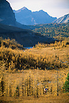 Hiker, Mount Assiniboine Provincial Park, British Columbia, Canada