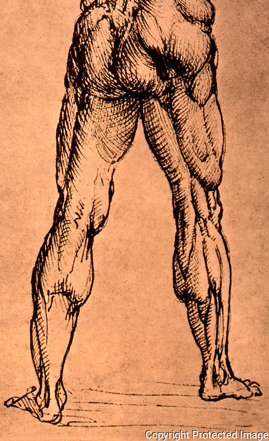 Visual Arts: Leonard Drawing-- Muscles of Back and Legs. Photo '84.
