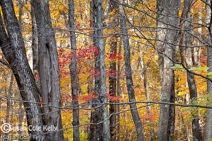 Fall foliage in Macedonia Brook State Park in Kent, CT, USA
