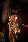 20150428 Wiedrich Arabians