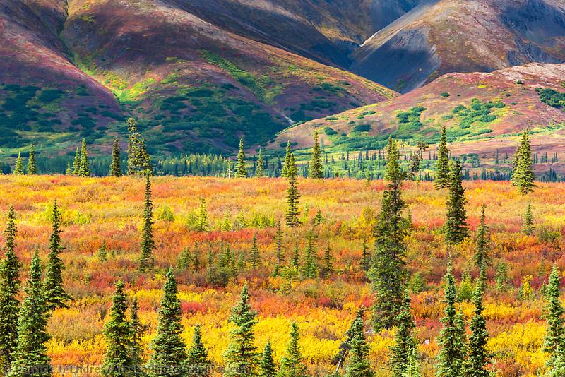 Autumn colors on the tundra, Alaska range mountains, interior, Alaska.
