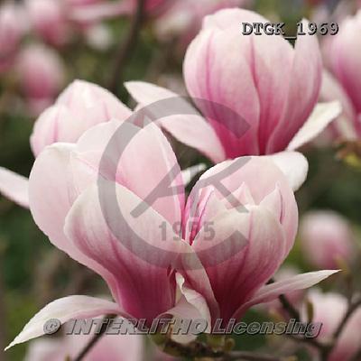 Gisela, FLOWERS, BLUMEN, FLORES, photos+++++,DTGK1969,#f#