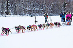 A dog team with pink boots starting the race. Knik 200 Sled Dog Race, Knik, Southcentral Alaska, Winter.