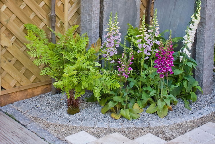 Digitalis next to garden wall fence, garden bed edging materials of pebbles and pavers