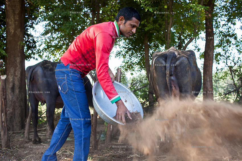 Dhiraj Khristi, 36, tends to his buffaloes at their farm house in Anand, Gujarat, India on 9th December 2012. Dhiraj's sister had convinced his wife Pinki to become a surrogate together in 2008 and Pinki has since done 2 surrogacies. While the couple used to make 2000-5000 rupees per month from farming and as labourers, she had made over 850,000 from both her surrogacies and had bought land, buffaloes and saved 320,000 rupees in a fixed deposit. They have both also convinced other villagers to become surrogates and earned a small amount from a successful introduction to Dr. Nayana Patel resulting in pregnancy. Photo by Suzanne Lee / Marie-Claire France