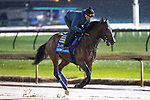 November 1, 2018: Game Winner, trained by Bob Baffert, exercises in preparation for the Breeders' Cup Juvenile at Churchill Downs on November 1, 2018 in Louisville, Kentucky. Alex Evers/Eclipse Sportswire/CSM