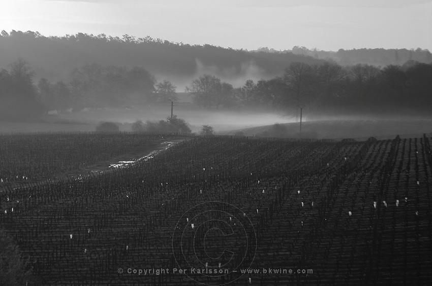 vineyard in early morning mist chateau pey la tour bordeaux france