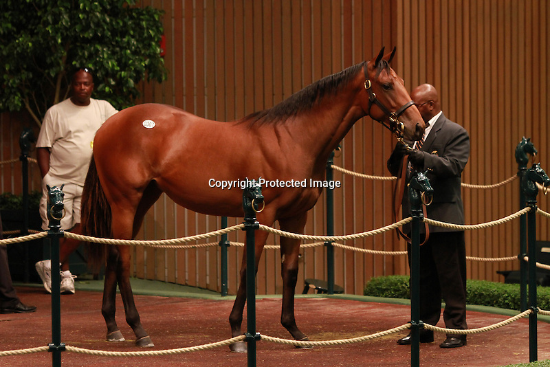 13 September 2011.Hip #307 Bernardini - Silk n'Sapphire filly sold for $1,200,000.