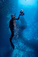 Vava'u, Kingdom of Tonga (Saturday August 13, 2016): Jordan Robins (AUS) Free diving in Swallows Cave. A winters day with a mix overcast to sunny skies, light winds and relatively clam seas was a good day for a whale watching  trip and the opportunity to swim with them in the waters off Vava'u.  The conditions kept most of the whales on the move today with a number of breaches. <br /> <br /> Tonga is one of the few places in the world where you can swim with these magnificent creatures. The migrating whales are generally around from June to late October with a number of births happening in the Tongan waters. Photo: joliphotos