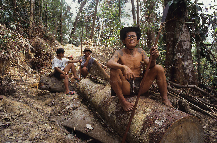 LOGGING, NOMADIC PENAN, MALAYSIA. Sarawak, Borneo, South East Asia.&nbsp; Tropical rainforest and one of the world's richest, oldest eco-systems, flora and fauna, under threat from development, logging and deforestation, 1991<br />