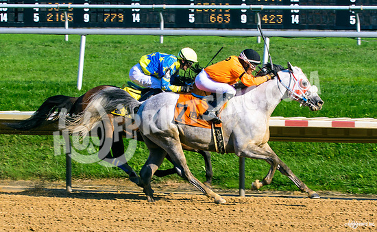 Easter Man winning The Delaware Park Arabian Classic (grade 1) at Delaware Park on 8/19/17