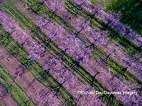 63801-11902 Peach orchard in spring-aerial  Marion Co. IL