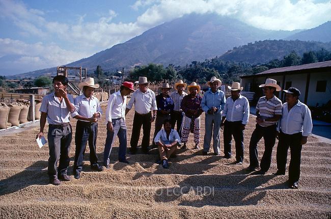 Guatemala, San Pedro La Laguna, Lake, Atitlan, coffee, coffea, organic, beans, process, dry, patio, worker, men, small, holder, cooperative