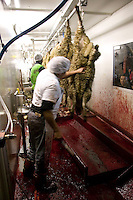 Butchers work in a temporary slaughterhouse set up in an hanger in Pantin, outside Paris, France, 1 February 2004, during the ritual sheep slaughter held for the Muslim celebration of Aid-el-Kebir. Photo Credit: David Brabyn.
