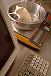 Rat specimen bowl on scale in toxicology lab