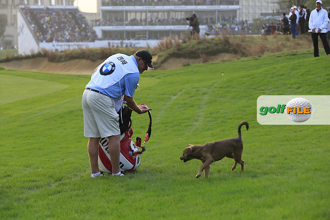 Stray dog takes a shine to Marcel Siem's (GER) caddy on the 18th hole during Sunday's Final Round of the 2014 BMW Masters held at Lake Malaren, Shanghai, China. 2nd November 2014.<br /> Picture: Eoin Clarke www.golffile.ie