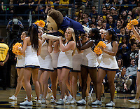 CAL cheerleaders carry Oski across the court during the game at Haas Paviliion in Berkeley, California on March 6th, 2013.  Stanford defeated California, 83-70.