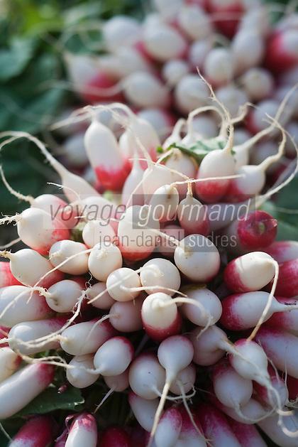 Europe/France/Pays de la Loire/49/Maine-et-Loire/ Angers: Bottes  de radis sur un étal du marché