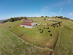 Calf marking and branding the Doug &amp; Loree Joses at the Plasse Ranch near Jackson, Calif.<br /> <br /> Photographed from above using a sUAV/quadcopter.