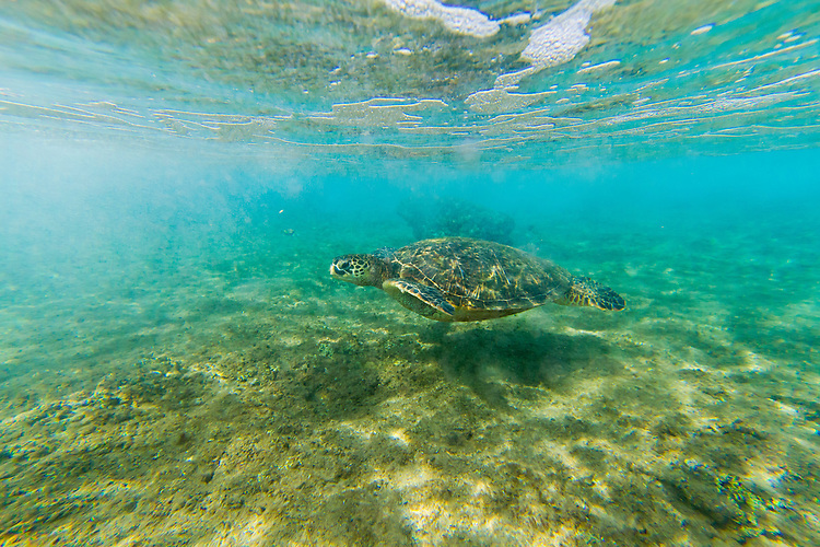 Snorkeling with fish off of Kaanapali Beach in West Maui, Hawaii, USA