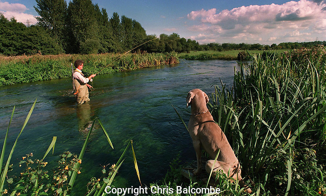Flyfishing on a peaceful Hampshire River. And the angler's dog watches intently! This photo has appeared in various newspapers and magazines. Photo by Chris Balcombe