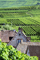 Rustic homes line the beautiful vineyards of the Alsace region in France.