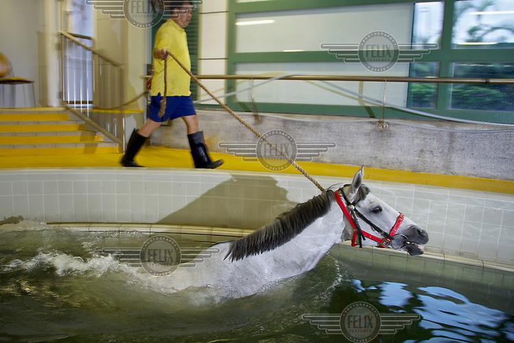 Multiple winner California Memory swims in a pool at the Hong Kong Jockey Club.