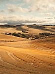 Harvested fields in the Palouse valley