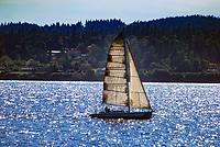 Yacht, sailing, Puget Sound, Washington State, USA, Victoria, British Columbia, Canada, 200809061013 ..Copyright Image from Victor Patterson, 54 Dorchester Park, Belfast, N Ireland, BT9 6RJ...Tel: +44 28 9066 1296.Mob: +44 7802 353836.Email: victorpatterson@mac.com..IMPORTANT: Go to www.victorpatterson.com and click on Terms & Conditions