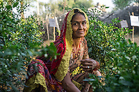 Birju Devi, 45, a farmer's wife and participant in Technoserve's kitchen garden program, tends to plants in her kitchen garden in Bamanwali village, Bikaner, Rajasthan, India on October 24th, 2016. Non-profit organisation Technoserve works with farmer's wives in Bikaner, providing technical support and training for edible gardening, to improve the nutritional quality of their food and relieve financial stress on farming communities. Photograph by Suzanne Lee for Technoserve