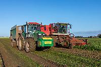 Harvesting sugar beet - Lincolnshire, December