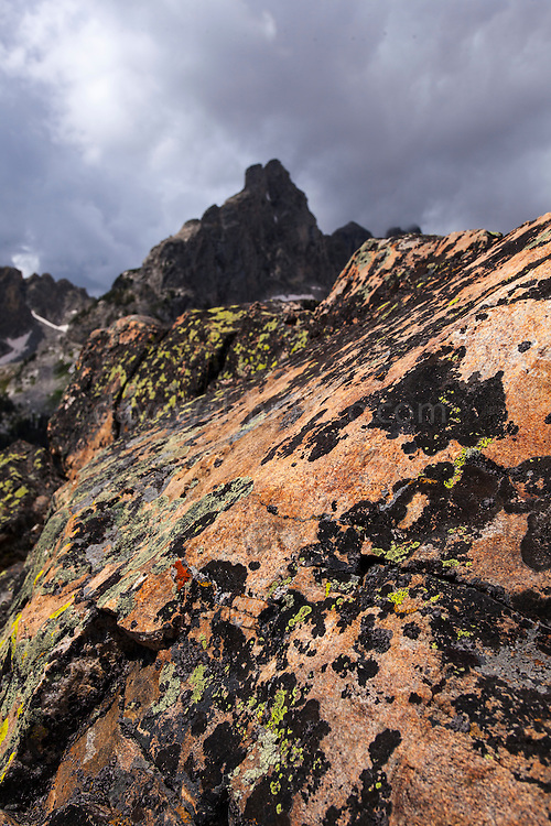 Lichen on rock, near Amphitheatre Lake and Nez Perce peak,  Grand Teton National Park