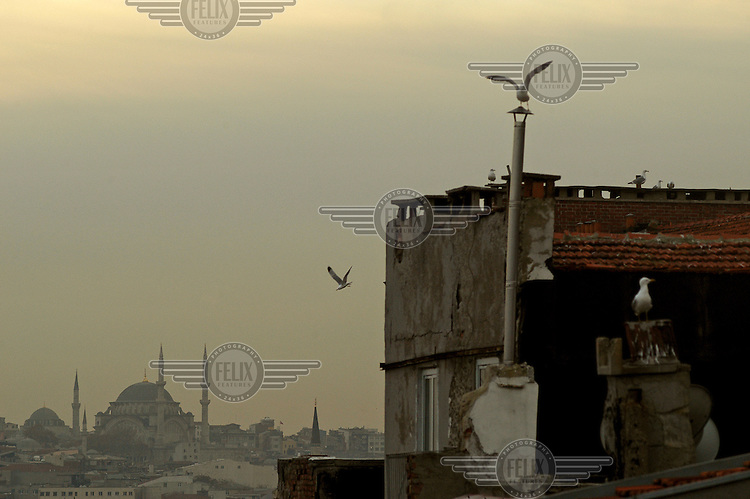 Seagulls on the roof of a building, with a mosque in the distance.