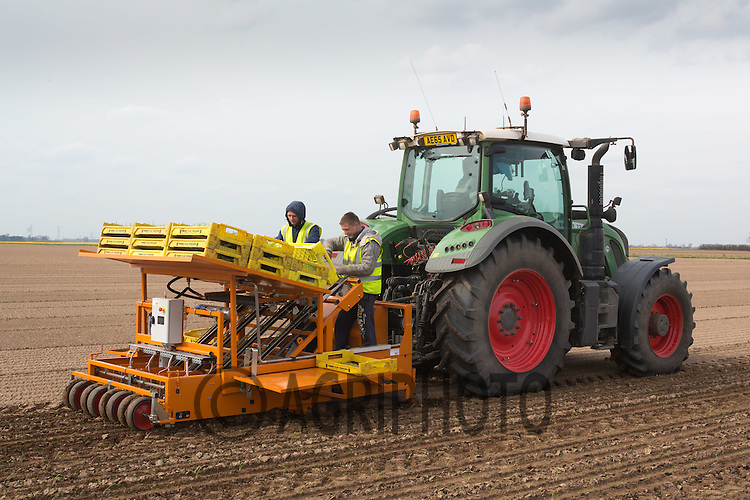 Planting fennel in the Lincolnshire fens<br /> Picture Tim Scrivener 07850 303986 <br /> scrivphoto@btinternet.com<br /> ….covering agriculture in the UK….