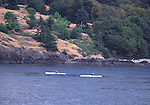 Sea kayakers off Lime Kiln Point on San Juan Island