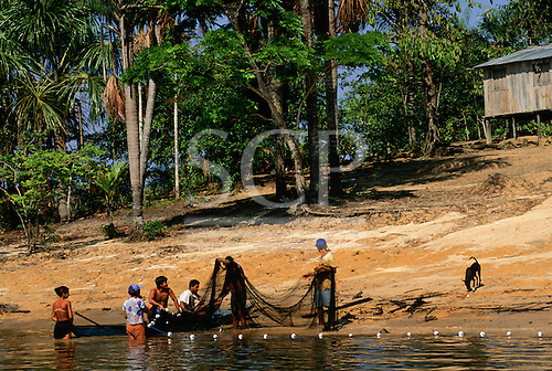 Rio Negro, Brazil. Caboclo family usaing a fishing net to fish from the banks of the river. Amazon.