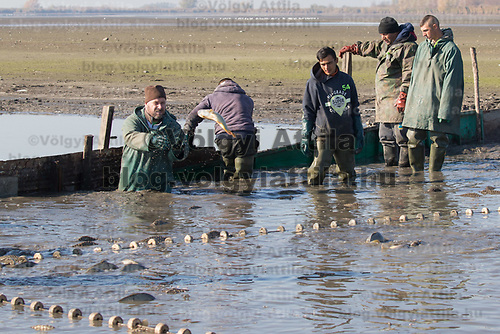 Hungarian fishermen work at one of Europe's biggest freshwater fishing firms in the Great Hungarian plains in Hortobagy in Hortobagy, 200 km (124 miles) east of Budapest in Hortobagy, Hungary on Nov. 7, 2017. ATTILA VOLGYI