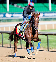 LOUISVILLE, KENTUCKY - MAY 02: Irish War Cry, owned by Isabelle de Tomaso and trained by H. Graham Motion, exercises in preparation for the Kentucky Derby at Churchill Downs on May 2, 2017 in Louisville, Kentucky. (Photo by Scott Serio/Eclipse Sportswire/Getty Images)