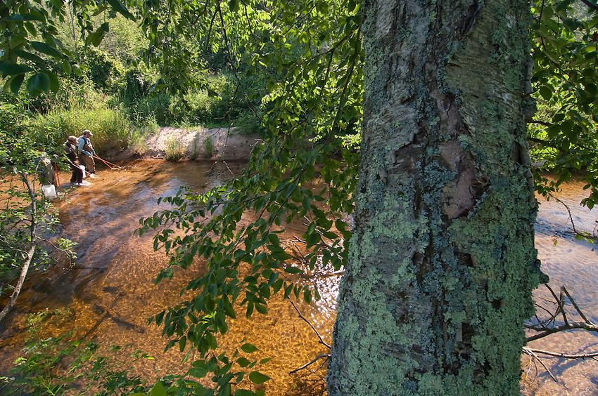 Coaster brook trout researchers electroshock the Salmon Trout River near Big Bay Michigan.