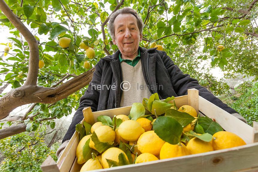 France, Alpes-Maritimes (06), Menton, La Citronneraie, Fran&ccedil;ois Mazet dans ces citronniers 'citron de Menton' en f&eacute;vrier.<br /> <br /> Mention obligatoire du nom de la personne ou/et de la Citronneraie.<br /> Pas d'usages publicitaires.
