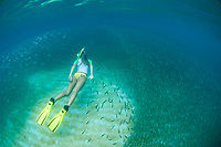 Snorkeler in a school of fry fish<br />