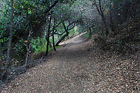 Afternoon light is filtered by the tree canopy while the trail itself is littered with fallen leaves.   The Chabot-to-Garin Regional Trail at Cull Canyon Regional Park in Castro Valley, California.