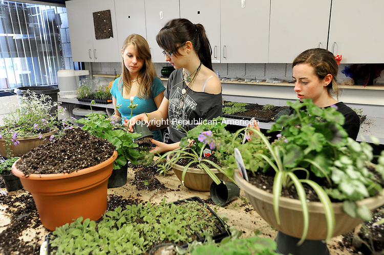 WOODBURY. CT, 06 MAY 2012-050412JS15-Students from the Nonnewaug High School Agri-Science program,  from left, Rachel Hudak of Southbury, Nicole Cassidy of Southbury and Erin Dibble of Woodbury set up hanging baskets as they prepare for the school's annual Mother's Day plant sale begining Saturday May 12. .Jim Shannon Republican-American