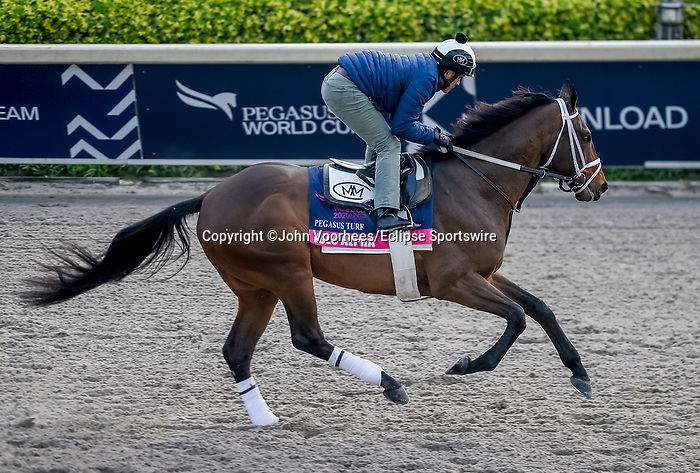 January 23, 2020: Zulu Alpha jogs on the main track as horses prepare for the Pegasus World Cup Invitational at Gulfstream Park Race Track in Hallandale Beach, Florida. John Voorhees/Eclipse Sportswire/CSM